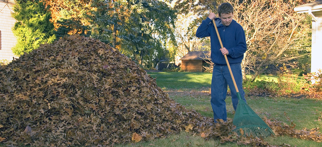 Avoid fines and contaminating when dealing with leaves, yard waste