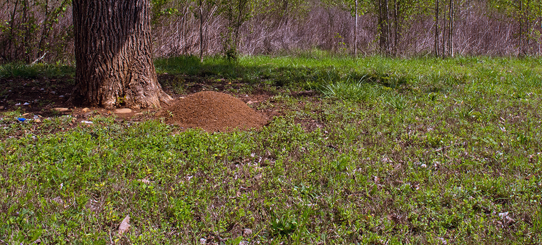 FIRE ANT CONTROL EFFECTIVE IF DONE RIGHT