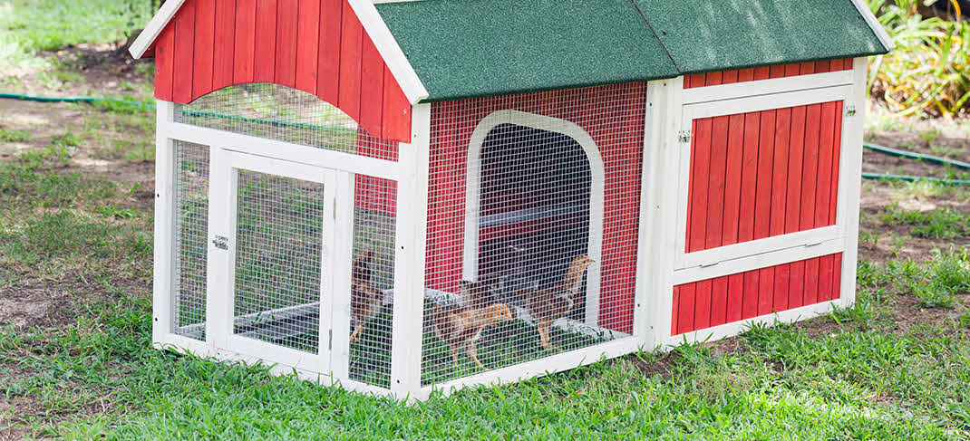 BACKYARD CHICKEN COOPS:  HEALTHY TREND WITH ENVIRONMENTAL RESPONSIBILITY