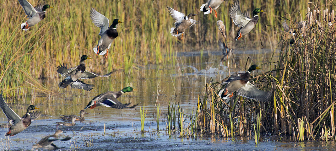 WATERFOWL HUNTING SITES WILL BE AVAILABLE AT BRA RESERVOIRS
