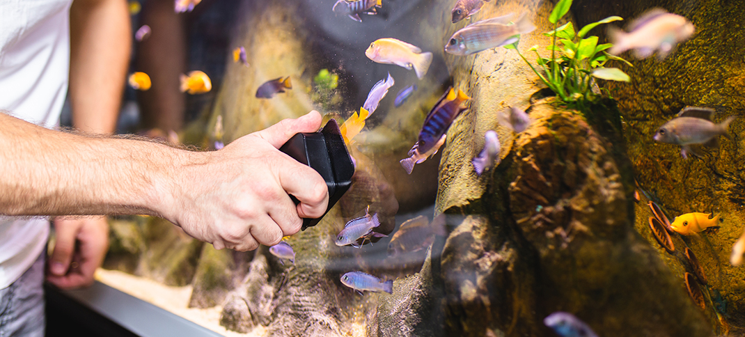 Prevent your pets from becoming pests by not dumping your aquarium